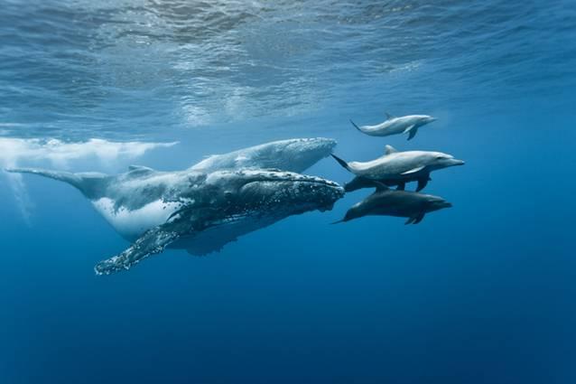 cetaces&dauphins
